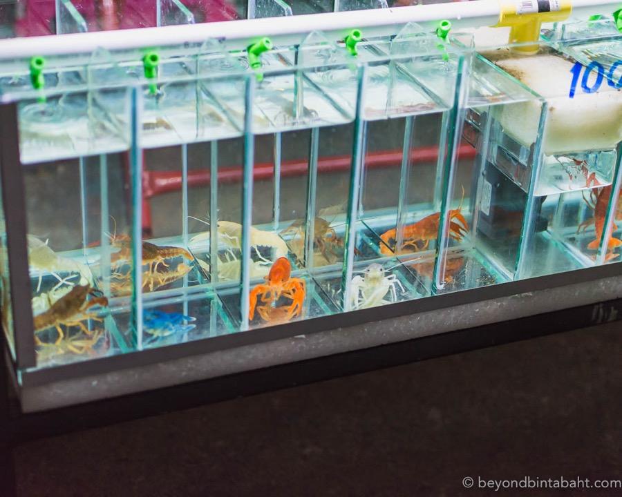 Pranburi Night Market shrimp-for-sale