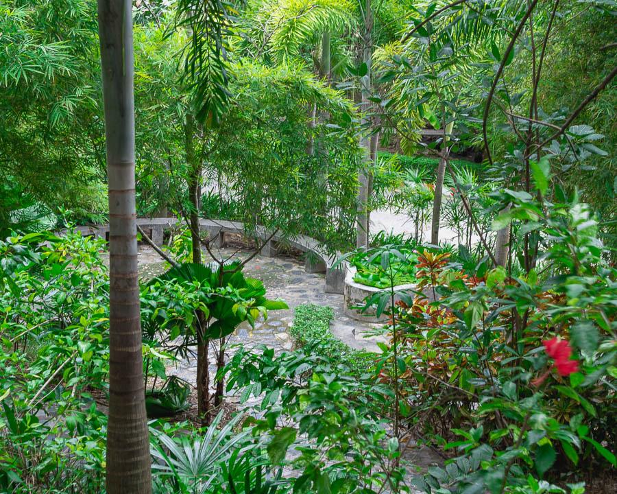 A lush, green garden